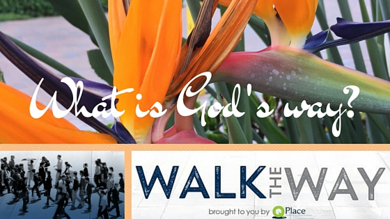 On the Radio – Walk the Way