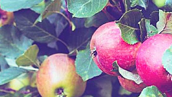 A fruitful yield